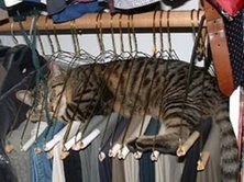 Cat all hung up!