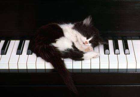 kitten sleeping on piano