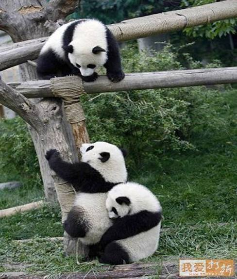 https://kathrynwarmstrong.files.wordpress.com/2012/01/pandas-helping-each-other.jpg