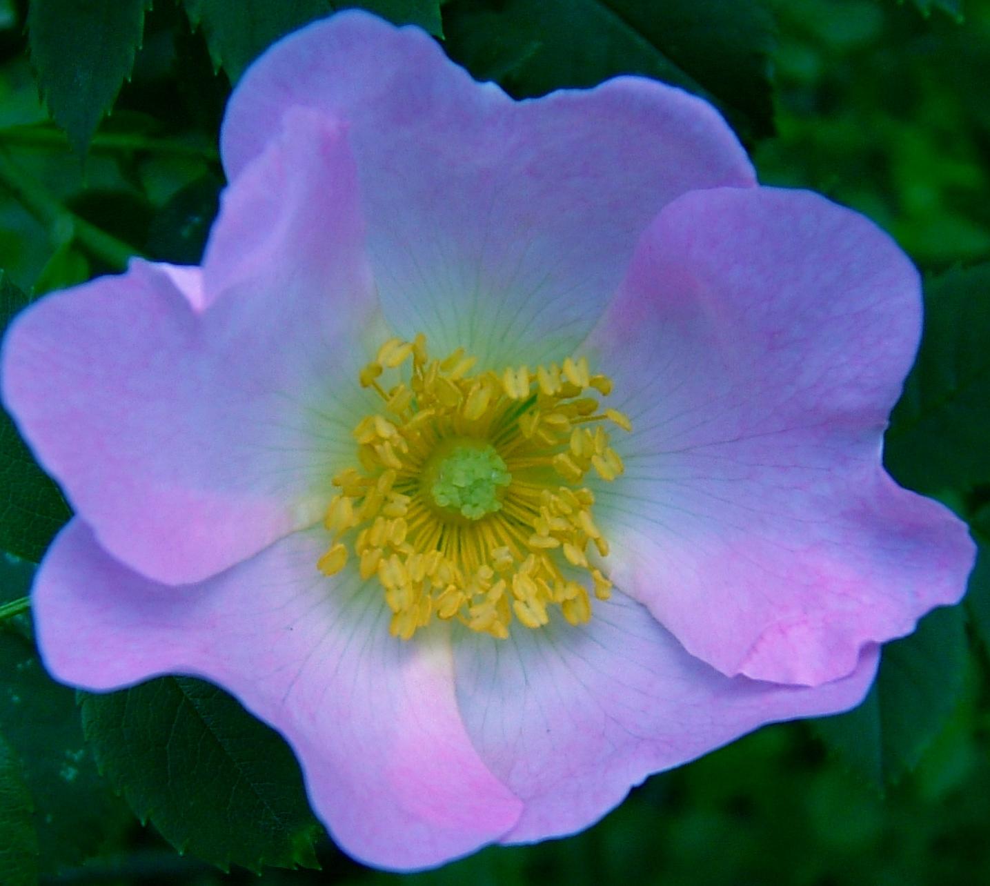 Spring flowers Elmore Leonard E B White Ralph Waldo Emerson W Somerset M