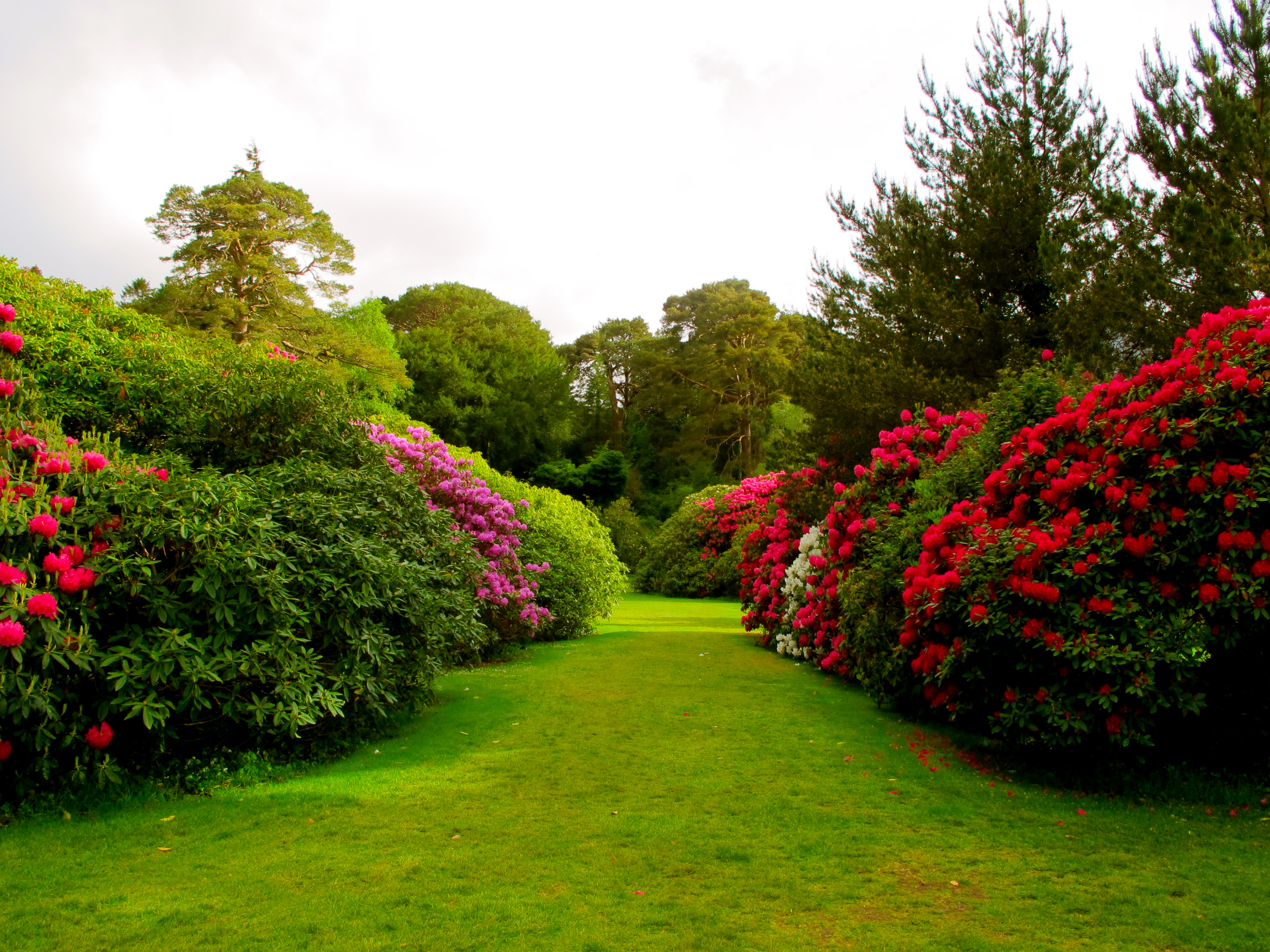 Muckross estate proverbs 23 4 5 beautiful gardens for Beauty garden