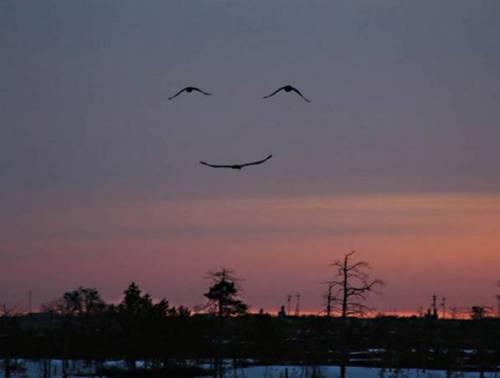 God's smile via Geese