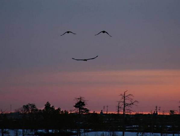 God's smile via Geese