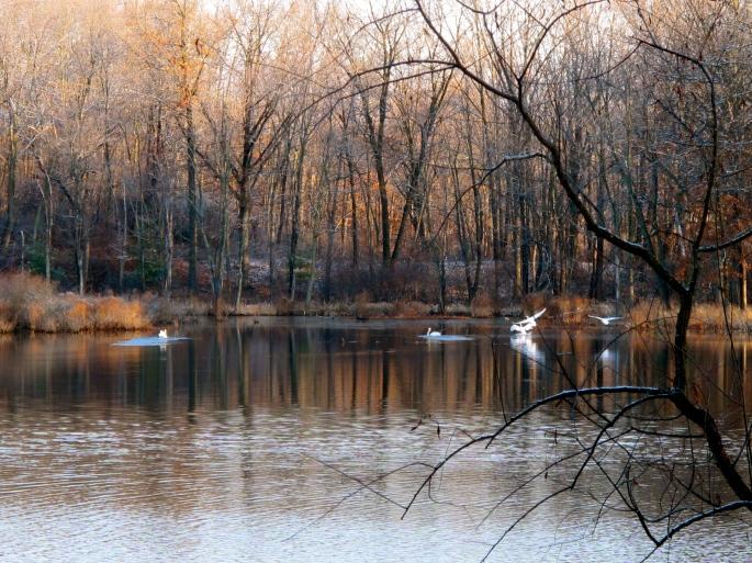 November Swans
