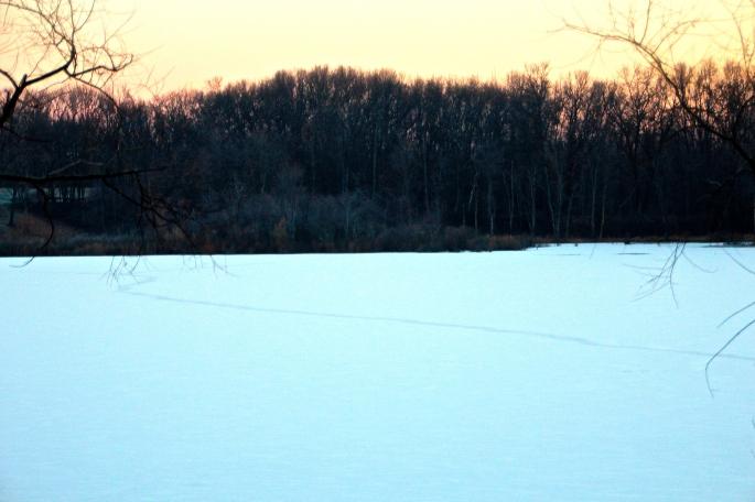 Deer crossing lake