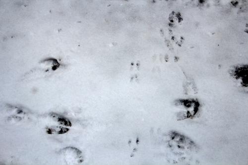 Mouse, deer,