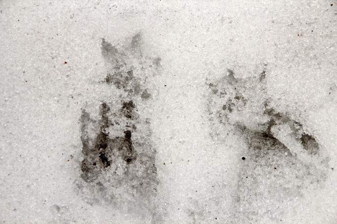 Possom Tracks