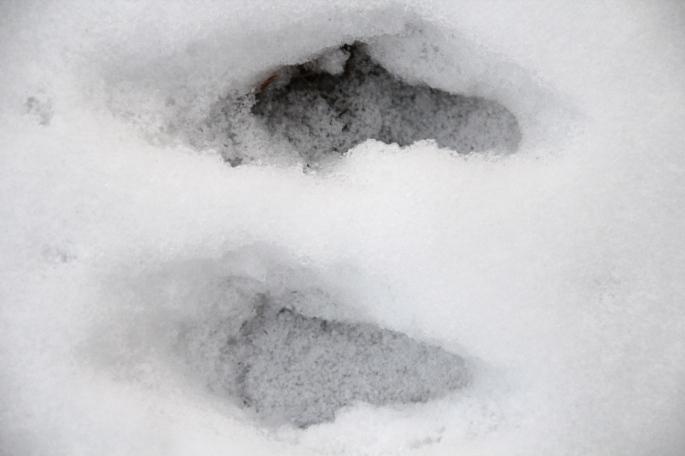 """Rabbit """"snowshoes"""""""