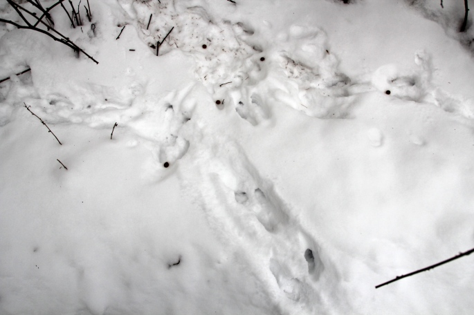 Rabbit with Pellets
