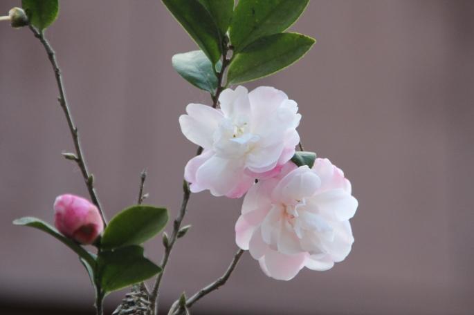 Spring flowers copy 2
