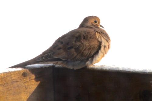 Dove One