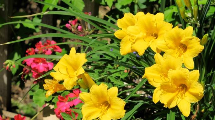 7 Poolside flowers