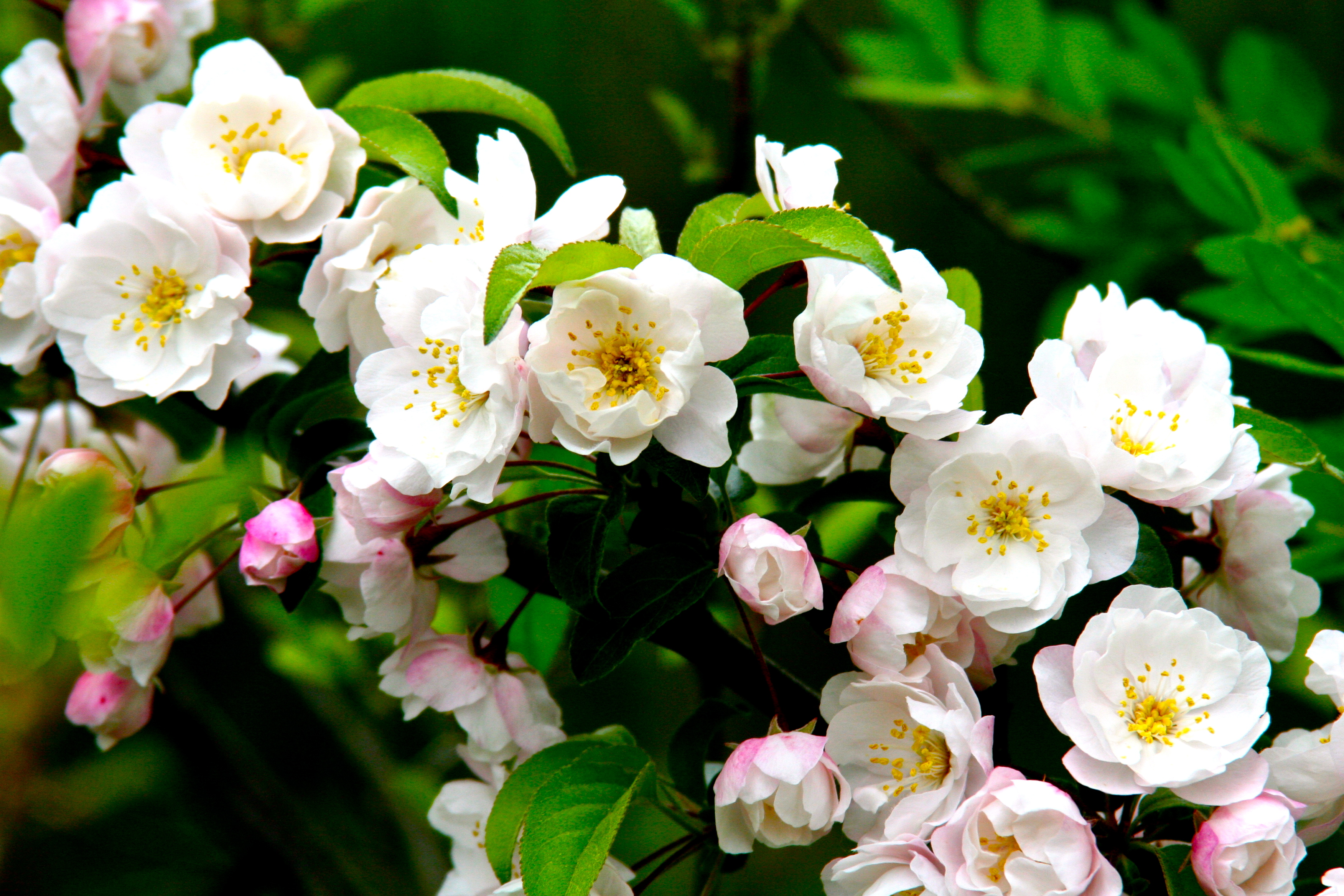 what was the forbidden fruit in the garden of eden fruits of the spirit kjv