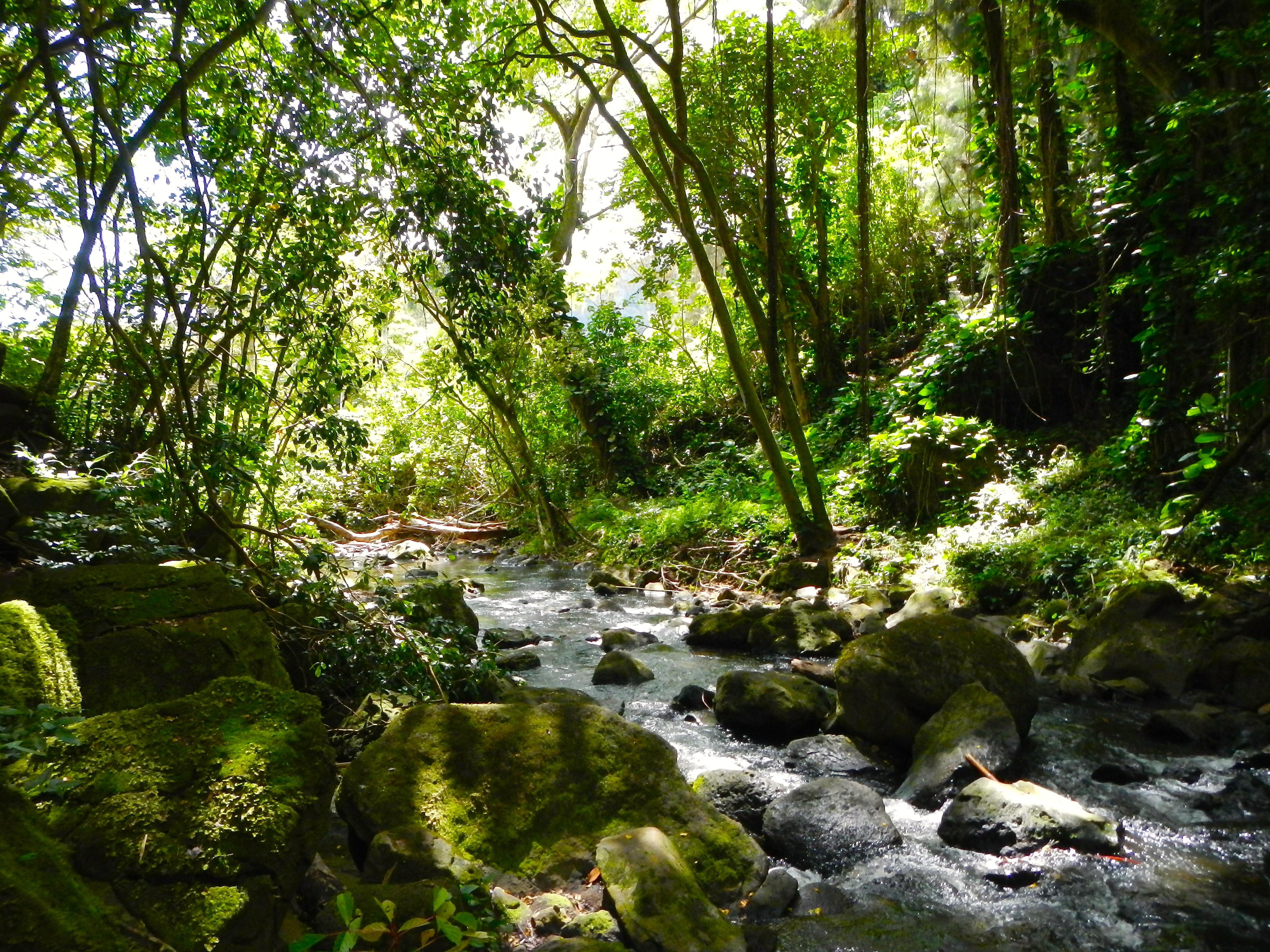 romantic nature walks hikes
