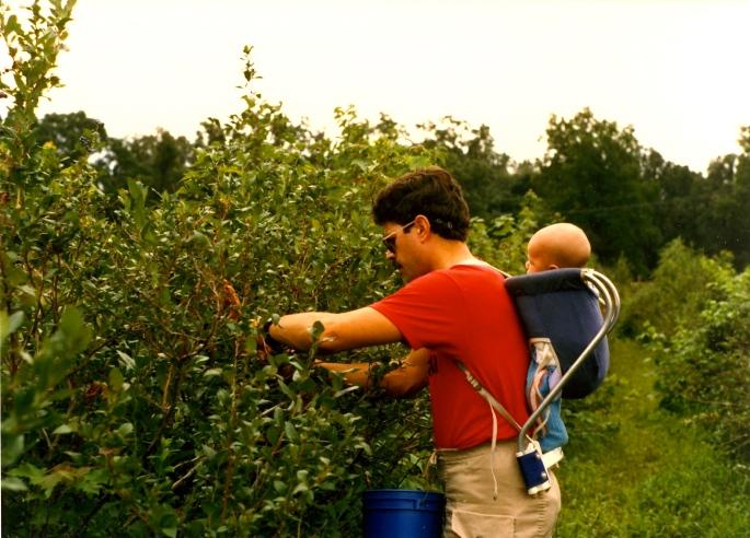 Alan picking berries