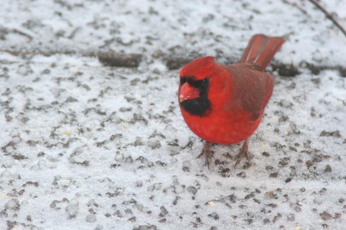 Cardinal copy