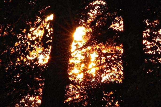 Sunrise on lake copy