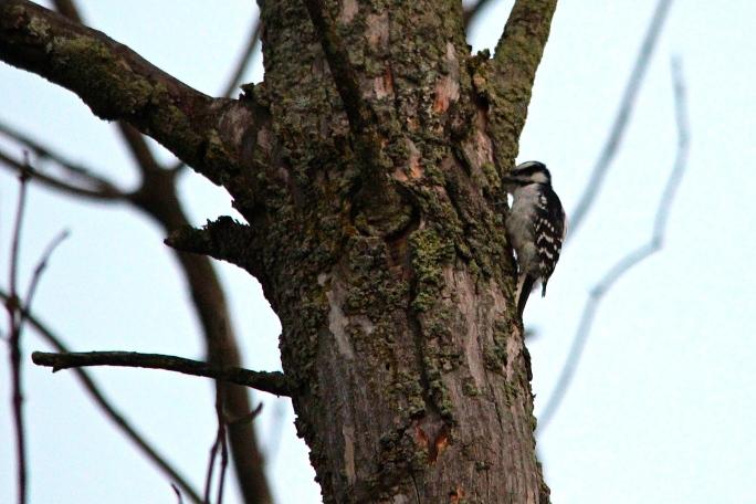 Woodpecker 9.25.13