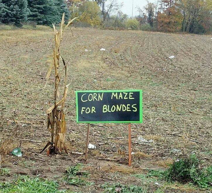 Puns And Jokes Punography Corn Maze For Blondes A Round