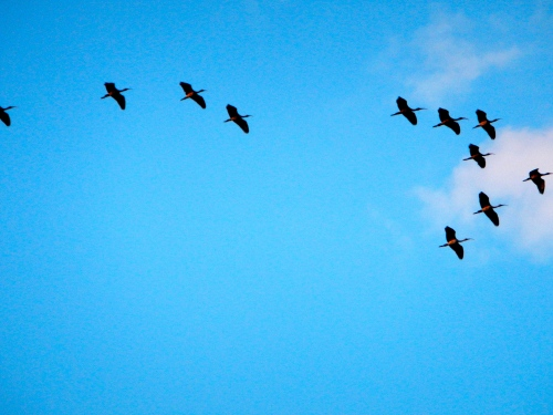 Birds Flying South