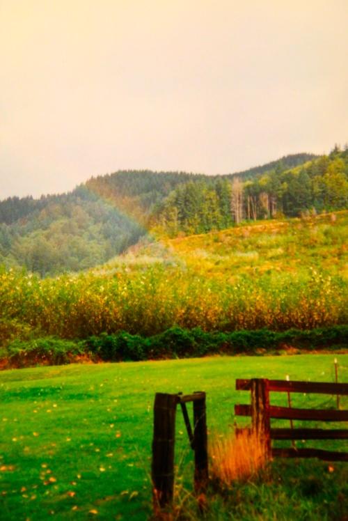 Rainbow in Field