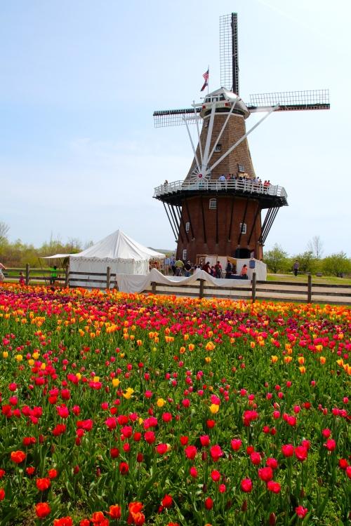 Tulip Time Festival In Holland Michigan Summer Setting