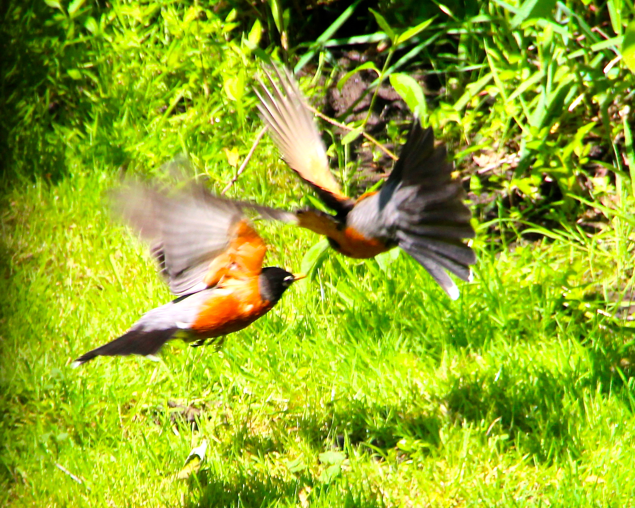 mating habits of the birds of
