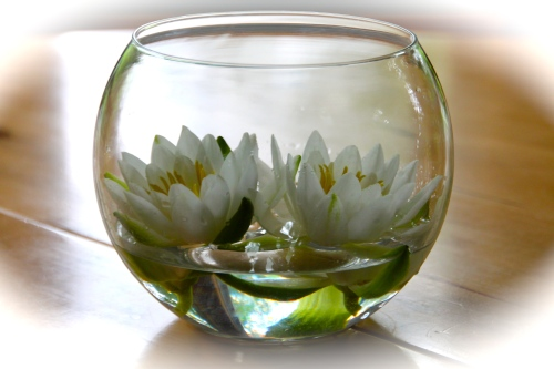 Waterlilies in Vase