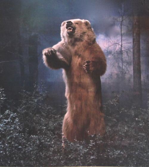 Bear Rearing Up