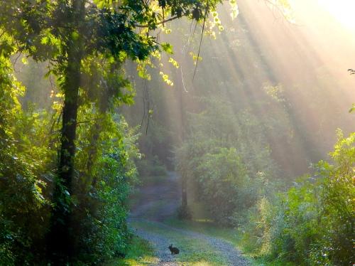 15 Sun filtering through trees on lane