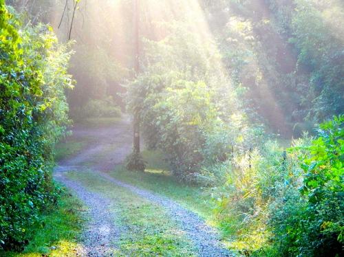 16 Sun filtering through trees on lane