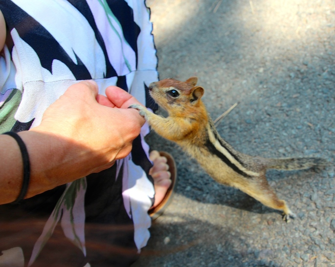Chipmunk holding finger copy