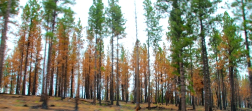 Damage from Forest Fire