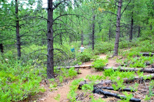 Deschutes National Forest trail to Tumalo Falls