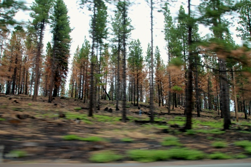 Forest Fire Damage Deschutes National Forest