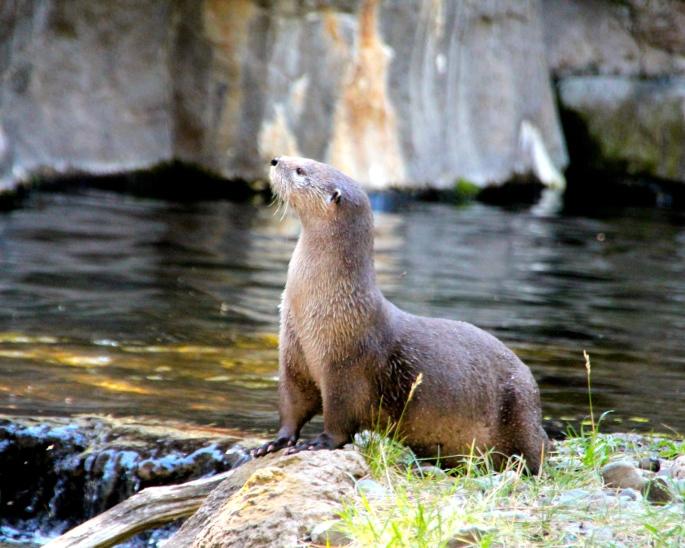Otter 7.31.14