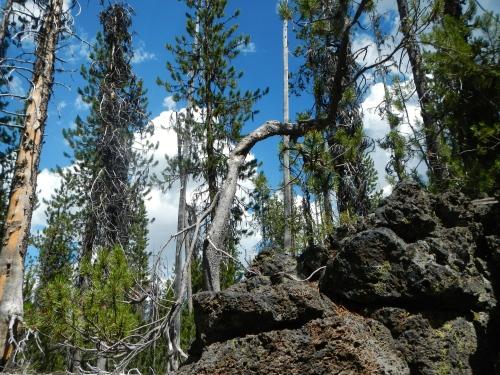 Ray Atkeson Trail