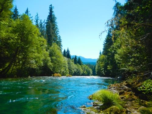Scenic Splendor of McKenzie River