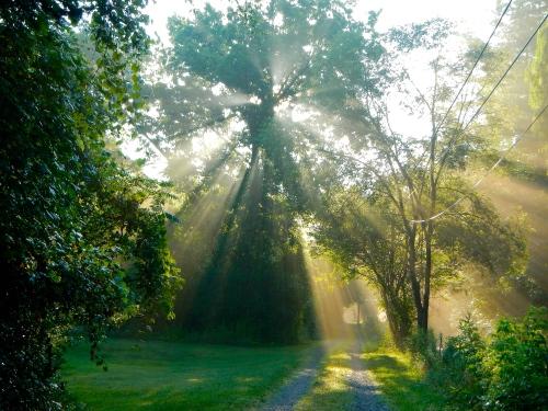 Sun filtering through trees 1