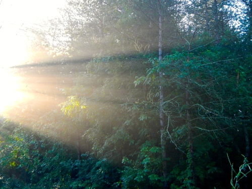 Sun filtering through trees 4