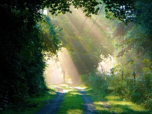 Sun filtering through trees 6