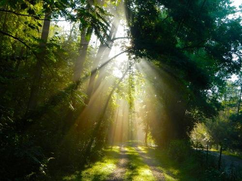Sun filtering through trees on lane 12