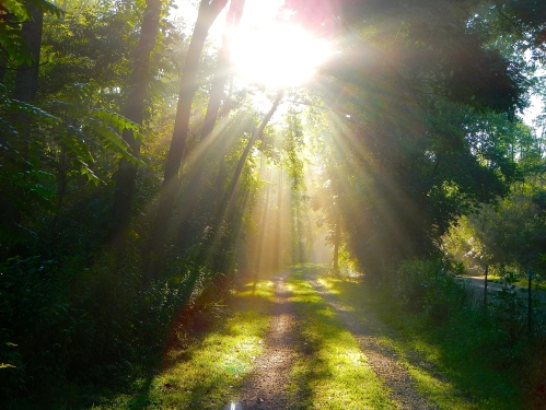 Sun filtering through trees on lane 13