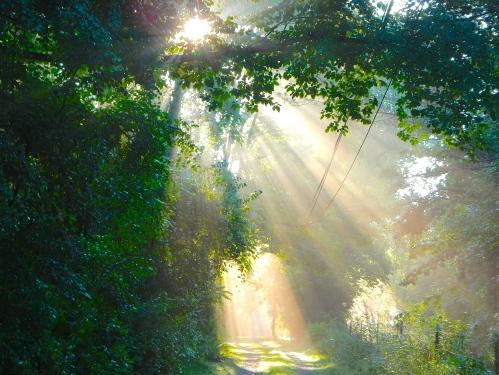 Sun filtering through trees on lane 7