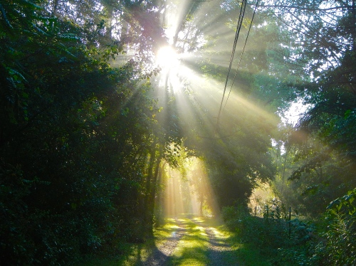 Sun filtering through trees on lane 8