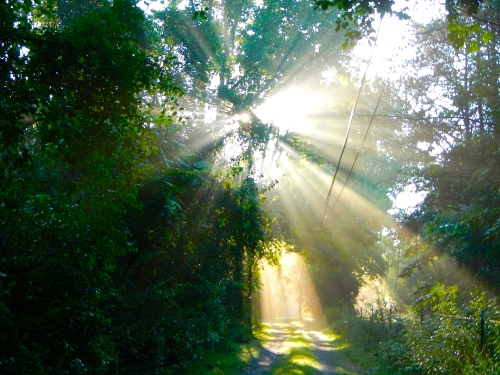 Sun filtering through trees on lane 9