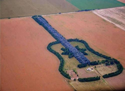 7,000i trees. Guitar. Argentina