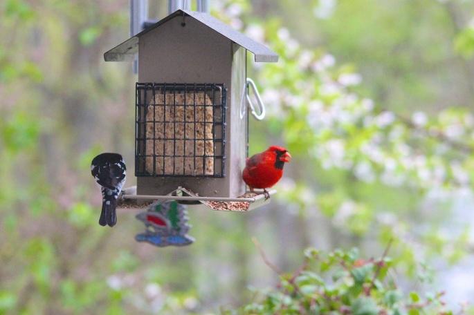 Birds at our feeder