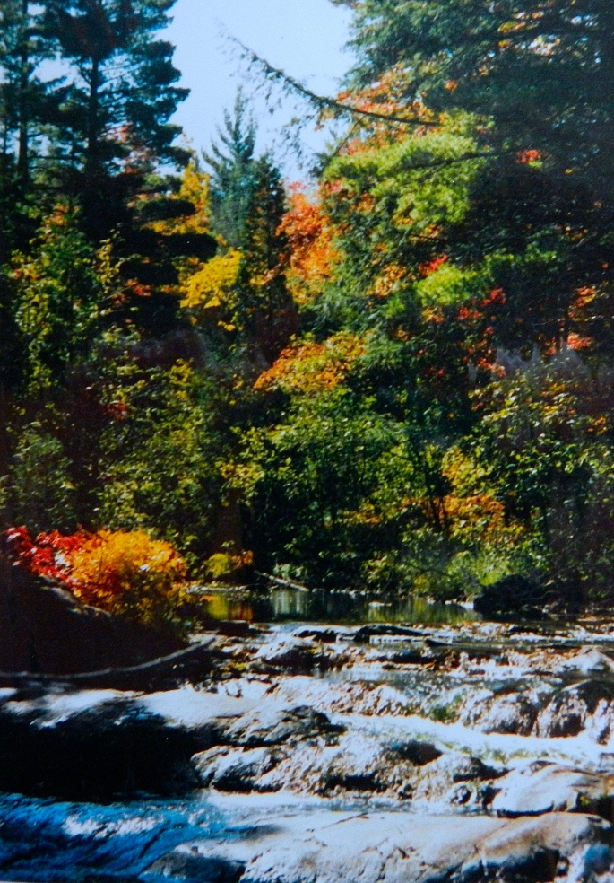 Dead River. Autumn