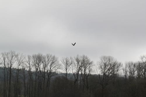 Eagle Flyin' High Heather Cushman